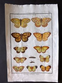 Diderot C1790 Antique Hand Col Print. Butterflies 17